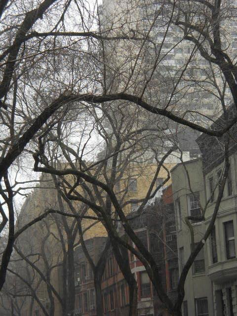 Tree Canopy Over the Brownstones