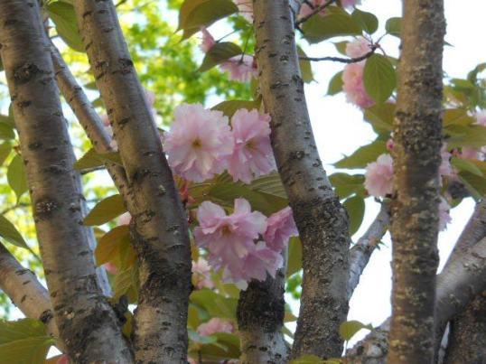 bloom-11-933977_10151886671184062_1261858318_n