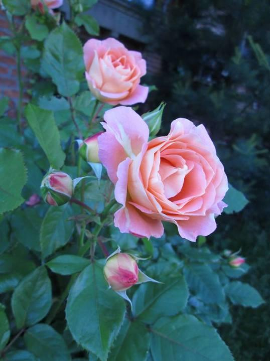 bloem-1-