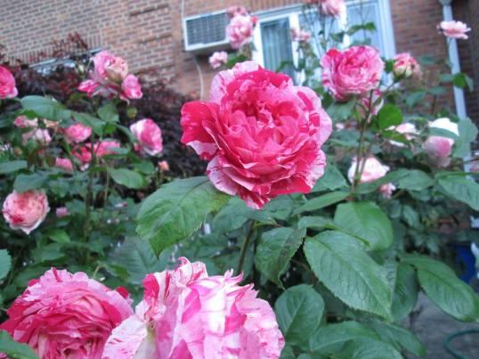 bloem-12-969535_10151969212299062_1319447181_n