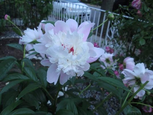 bloem-2-485444_10151969209819062_1392396925_n