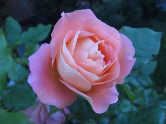 bloem-3-936211_10151969198994062_1157592711_n