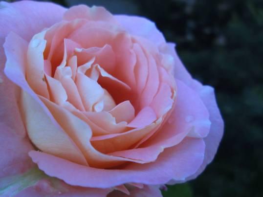 bloem-5