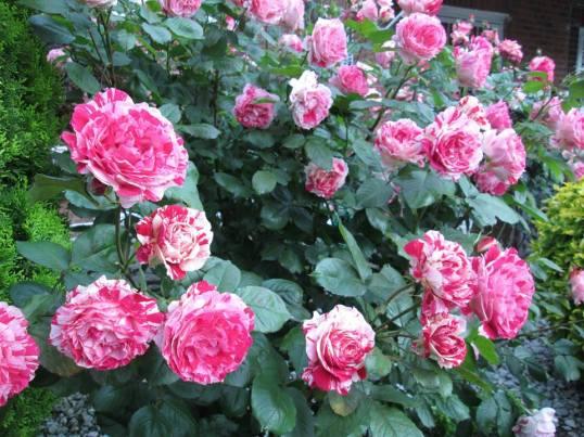bloem-6-942561_10151969210414062_2069271345_n