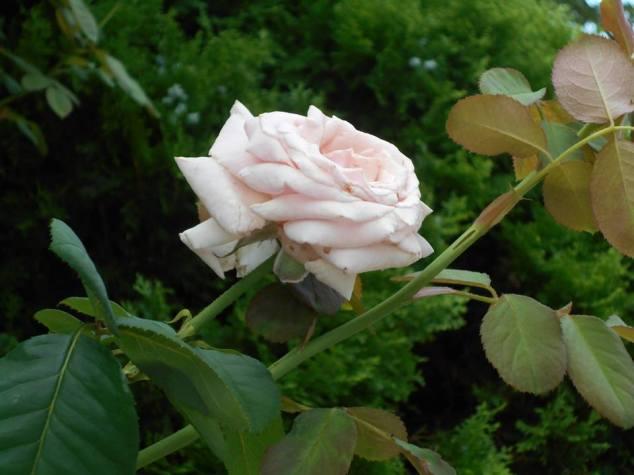 jardin-2-1004908_10152072874794062_1443636450_n