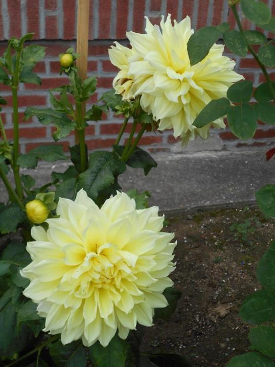 lule-17-
