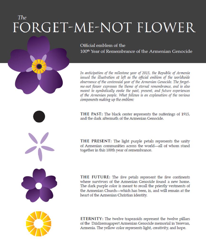 armenian forgetmenot flower  splendiferous everything, Natural flower