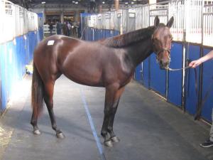 My second racehorse, FUNKYMUNKYSUNSHINE!